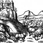 Munster Wawelski