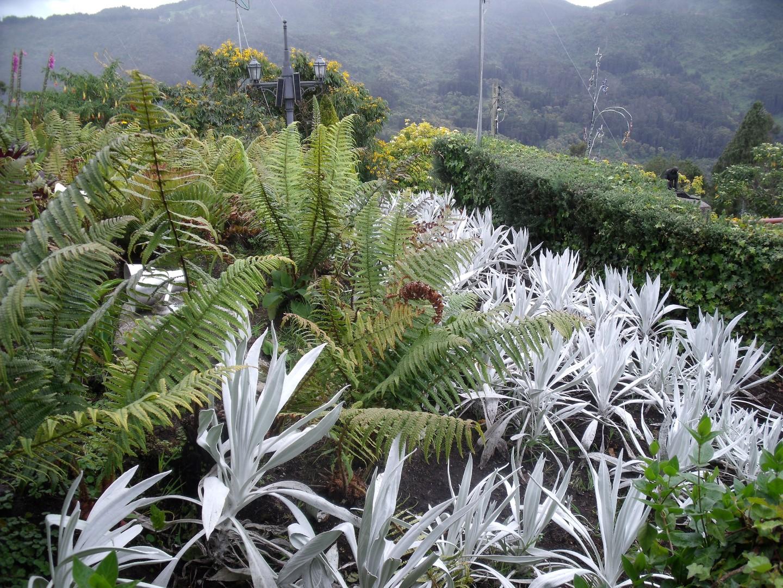 Gardens at Monserrate Bogota (4)